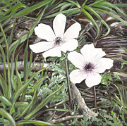 Close Up Painting Metal Prints - White Anemone  Metal Print by Nurit Shany