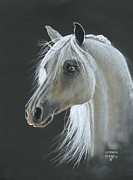 White Arab Pastels Prints - White Arabian Print by Heather Gessell