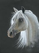 White Arabian Print by Heather Gessell