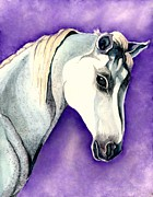Arabians Framed Prints - White Arabian Horse  Framed Print by Janine Riley