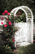 Red Flower Photos - White arbor with red roses by Elena Elisseeva