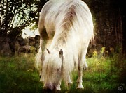 Grazing Horse Digital Art Posters - White beauty Poster by Gun Legler