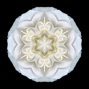 David J Bookbinder - White Begonia II Flower...
