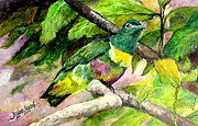 Jason Sentuf - White-bibbed Fruit Dove