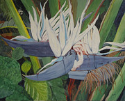 Hilda and Jose Garrancho - White Bird of Paradise