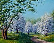 A Sunny Morning Painting Prints - White Blossoms Print by Rick Hansen