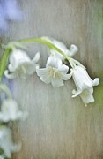 Astrid Ewing - White bluebell...happily...