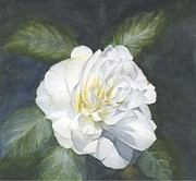Camellia Paintings - White Camellia by Olivia Yang