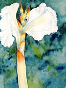 Canna Painting Framed Prints - White Canna Flower Framed Print by Carlin Blahnik
