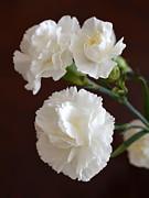 John Tidball  - White Carnations