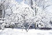 Patricia Sundik - White Christmas Soft...