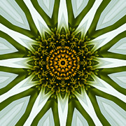 Mandala Photos - White Coneflower Mandala 12 by Carrie Cranwill