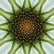 Mandala Photos - White Coneflower Mandala 7 by Carrie Cranwill