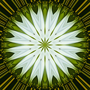 Mandala Photos - White Coneflower Mandala 9 by Carrie Cranwill