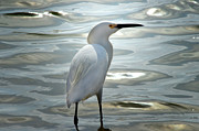 Los Angeles Digital Art Metal Prints - White Crane Metal Print by Camille Lopez