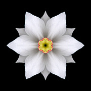 White Daffodil II Flower Mandala Print by David J Bookbinder