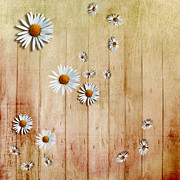 Fence Art - White Daisies by David Ridley