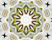 Artists4god Prints - White Daisies Kaleidoscope Print by Rose Santuci-Sofranko