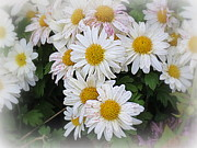 Lazy Digital Art - White Daisies by Kay Novy