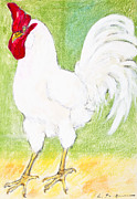 Domestic Pastels - White domestic cock by Kurt Tessmann