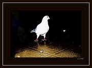 YoMamaBird Rhonda - White Dove