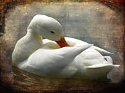 Barbara Orenya - White Duck