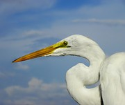 Priceless Photos - White Egret by Carolyn Bistline