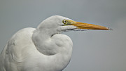 Tammy Chesney - White Egret