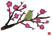 Japanese White Eye Posters - White Eye And Japanese Plum Tree Poster by Keiko Suzuki