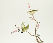 Ornithological Framed Prints - White Eye Bird Framed Print by Chinese School