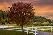 Old Country Roads Prints - White Fences Print by Debra and Dave Vanderlaan