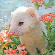 Ferrets Prints - White Ferret Print by Jane Schnetlage