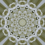 Mandala Photos - White floral Mandala 4 by Carrie Cranwill