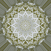 Mandala Photos - White Floral Mandala 7 by Carrie Cranwill