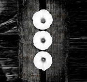 Beautiful Photo Originals - White flower on wood by Tommy Hammarsten