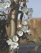 Charles River Painting Posters - White Flowers Poster by Michele Renee