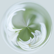 Digital Processing Prints - White Green and Round Print by Anne Gilbert