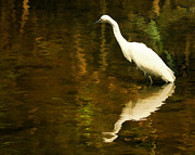 White Heron Print by Dick Wood