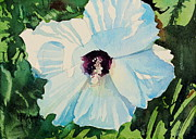 Spencer Meagher - White Hibiscus
