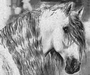 Wild Horse Drawings - White horse by George Rossidis