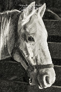 Horse Art Photographs Posters - White Horse In A Stable-Columbia Missouri Series 01 Poster by David Allen Pierson