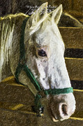 Horse Art Photographs Posters - White Horse In A Stable-Columbia Missouri Series 02 Poster by David Allen Pierson