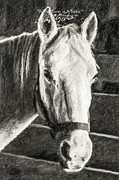 Horse Art Photographs Posters - White Horse In A Stable-Columbia Missouri Series 03 Poster by David Allen Pierson