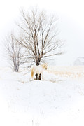 Jesska Hoff - White horse in winter...