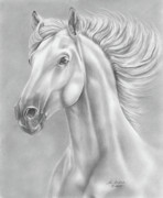Pet Drawing Drawings Posters - White Horse Poster by Lena Auxier