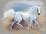White Horses Pastels Framed Prints - White Horse Framed Print by MM Anderson