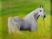 Farm Team Paintings - White Horse by S Prapanthawee