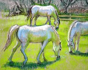 Animals Pastels Framed Prints - White Horses Grazing Framed Print by Sue Halstenberg