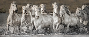 White Horses Photo Prints - White Horses Print by Heather Swan