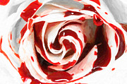 Shell Texture Painting Prints - White In Red Print by MotionAge Art and Design - Ahmet Asar